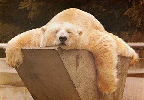北極熊03.jpg