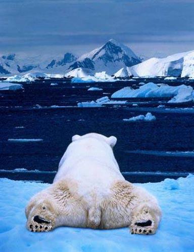 北極熊07.jpg