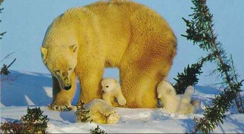 北極熊14.jpg