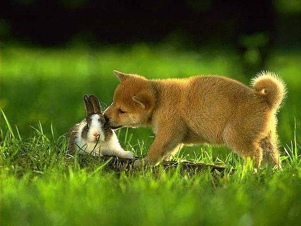 親親兔女郎.jpg