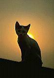 cat-1.bmp