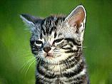 cat-2.bmp