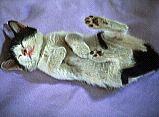 cat-3.bmp