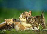 cats.bmp
