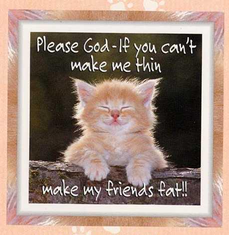 cat-thin.jpg