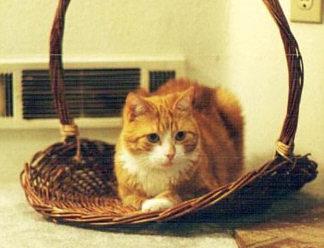竹籃中的貓.jpg