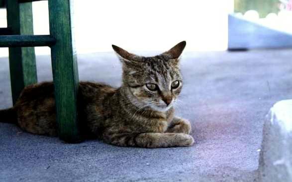 希臘的貓.jpg