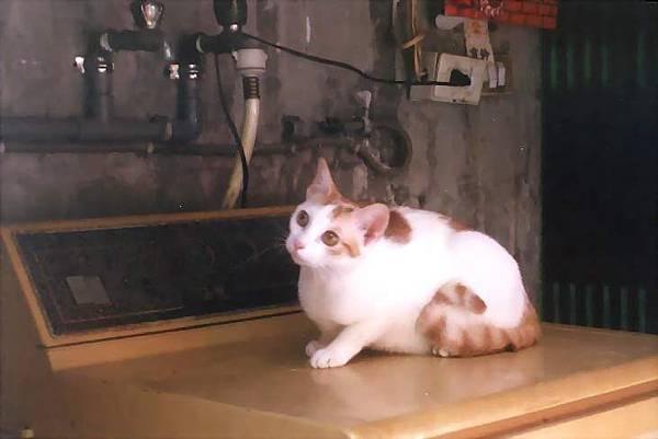 貓Mia06-1.jpg