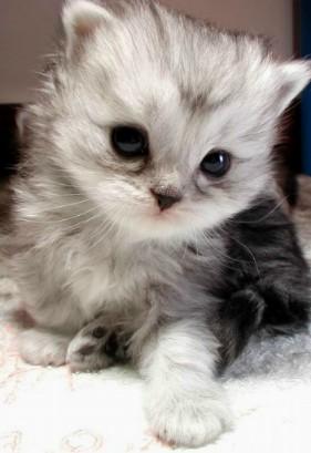 cat01.jpg