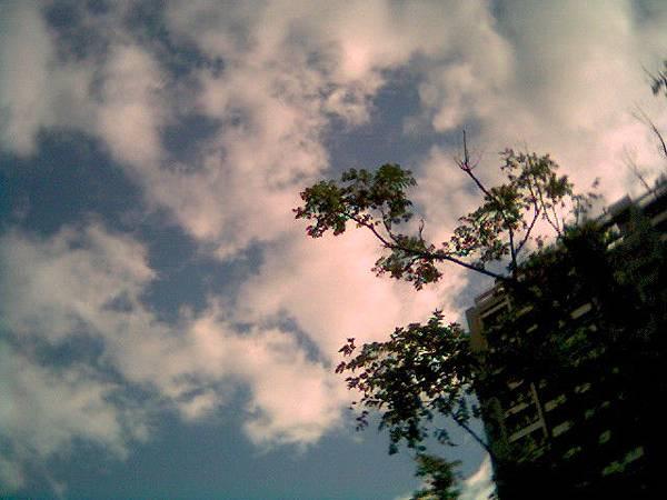 2007.12.10 天母蘭雅公園