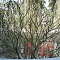 藝能館的樹