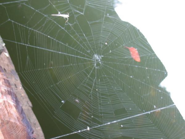 蜘蛛網啦...