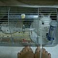 豪華雙層鼠籠=漂亮狹小兔籠
