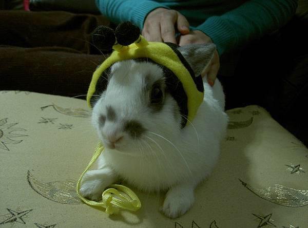 其實很討厭戴帽子