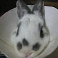也有人說像兔頭放在盤子上= =///