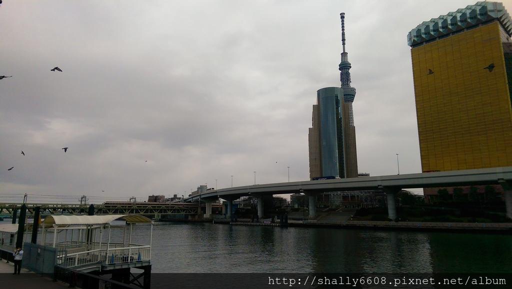 IMAG6516.jpg
