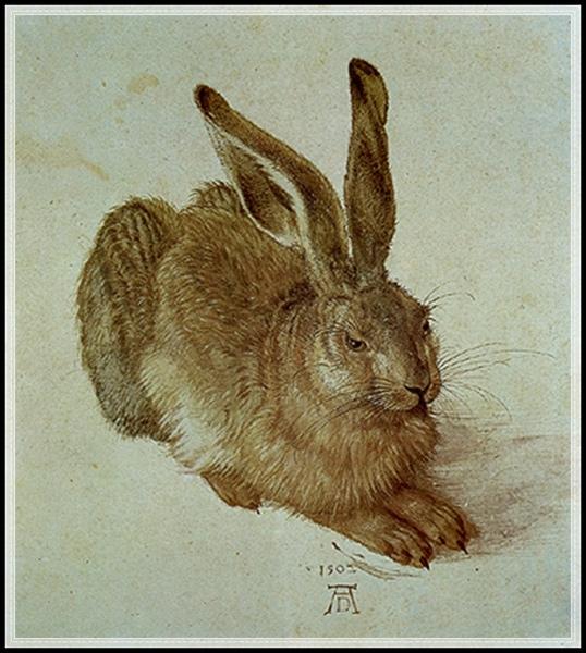 杜勒的野兔.jpg