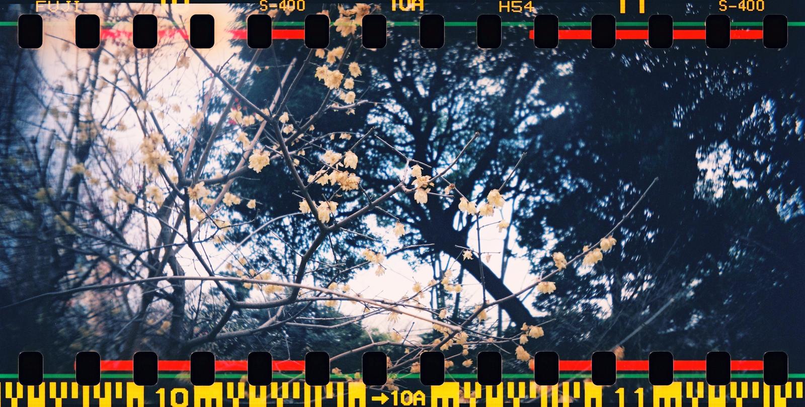 000006 Lomo Sprocket Rocket X Fujifilm X-TRA 400