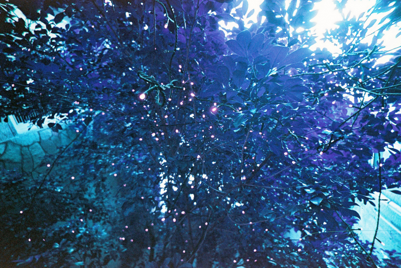 0039 Lomo LC-W x Lomochrome Purple XR.jpg
