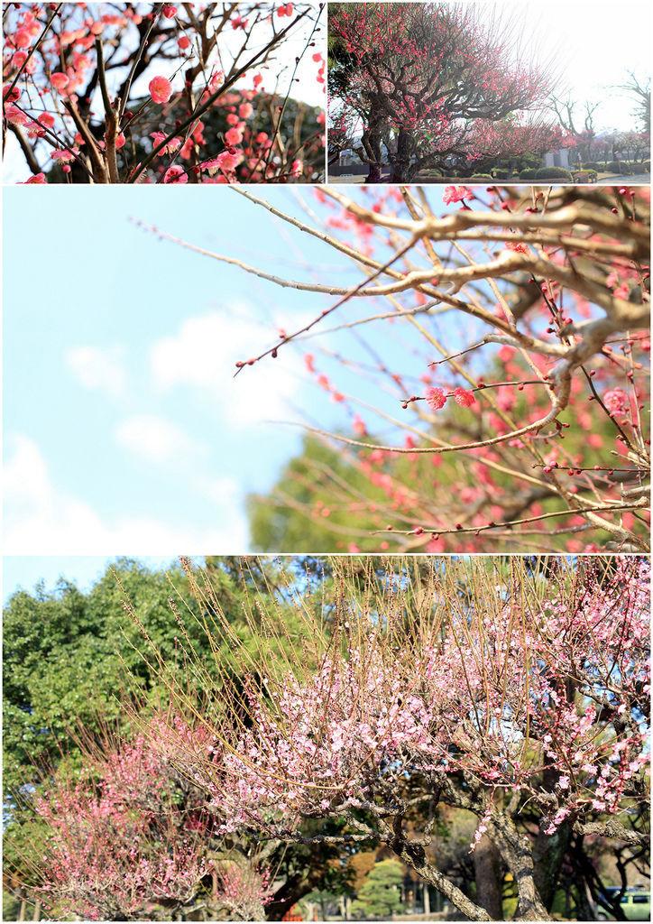 Kyushu01 006.jpg