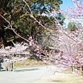 Kyushu03 010.JPG