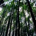 嵐山的竹林道