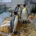 """企鵝睡覺感覺超像""""稍息立正站好""""的啦!!"""