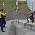 企鵝站姿好挺好像Model 真是訓練有素 XD