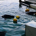 這個池子可以超近距離看到海豚
