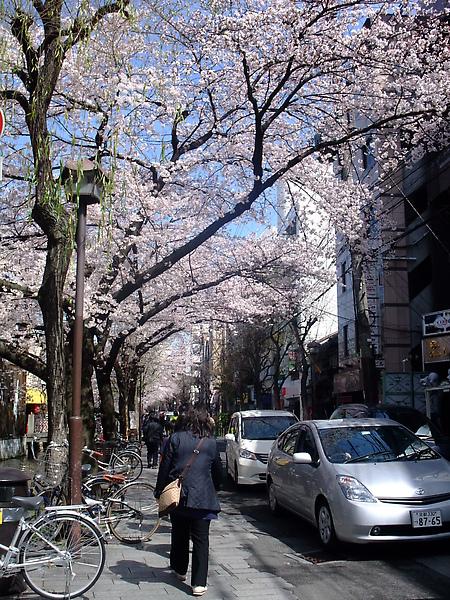 2010.04.04 天氣超好~目標京都的哲學之道