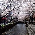 光河原町路邊的櫻花就讓我們猛拍不停 都快忘記真正目的是哲學之道了