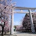 秘密賞櫻景點~大阪護國神社