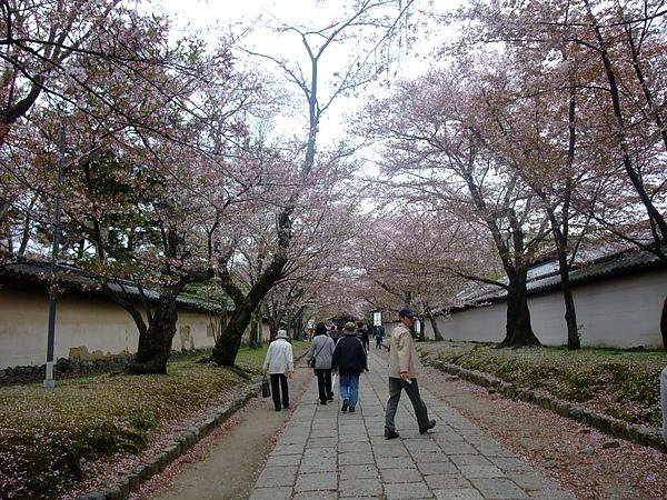 2010.04.11 抓住賞櫻最後機會~衝去超遠的醍醐寺