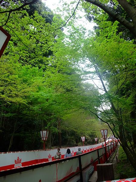 正面大道的嫩綠楓葉好美