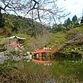 這裡是我覺得醍醐寺最美的一景