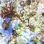 在小琉球杉福潮間帶,豐富的海藻