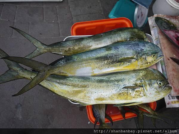 最相愛的魚:鬼頭刀