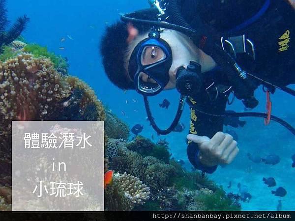 綠蠵龜潛水001