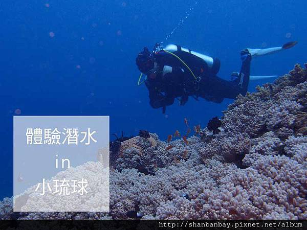綠蠵龜潛水004