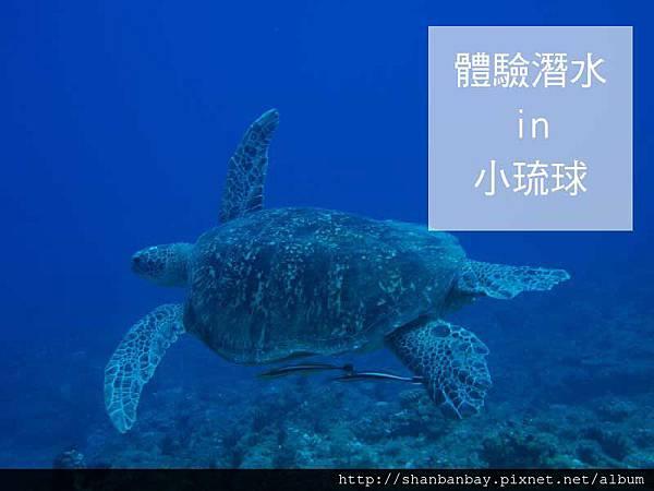 綠蠵龜潛水005