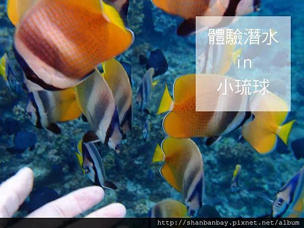 綠蠵龜潛水002