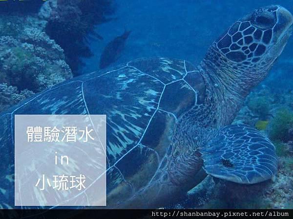 綠蠵龜潛水006