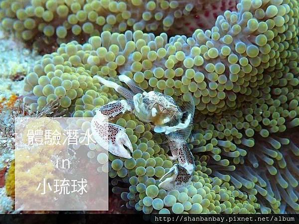 綠蠵龜潛水007