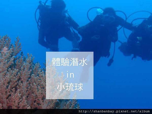 綠蠵龜潛水003