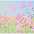 蘆竹花海節059.JPG