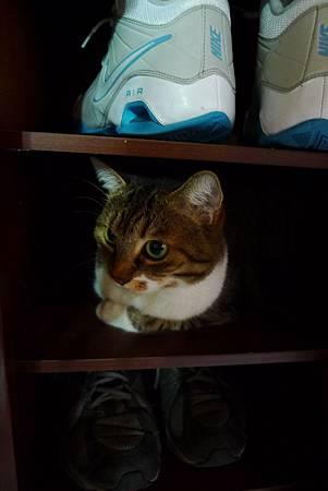 鞋櫃裡的貓