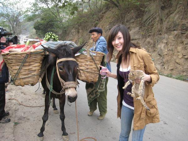 剛好遇到馬幫在運香蕉跟鳳梨