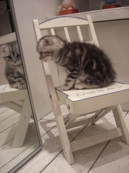 坐在小椅子上好乖巧