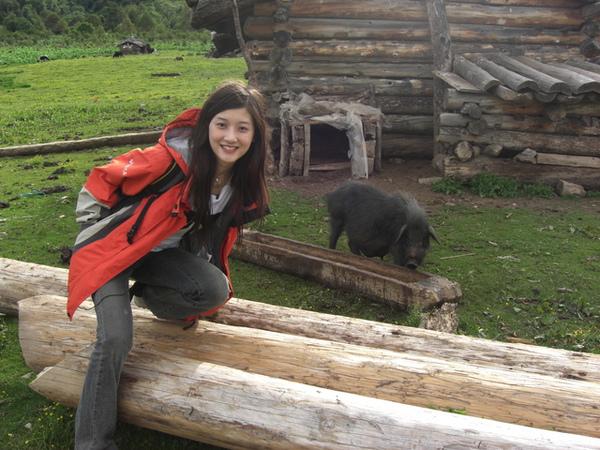 另一個牧場遇到的豬