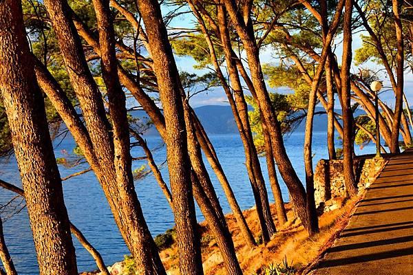 trees-3735546_960_720.jpg